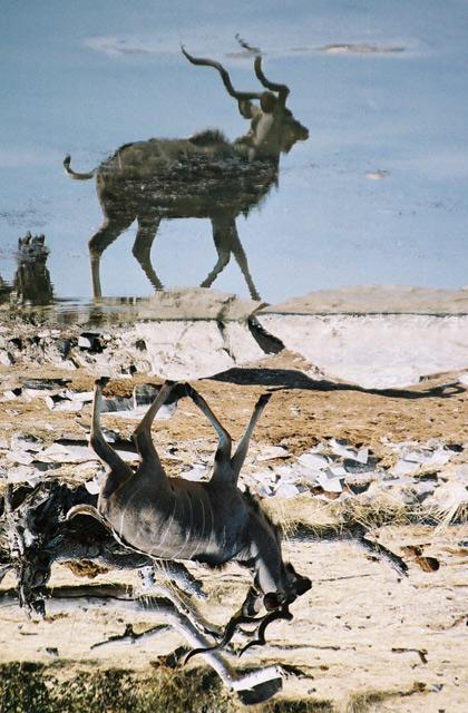 [Obrazek: kudu.jpg]