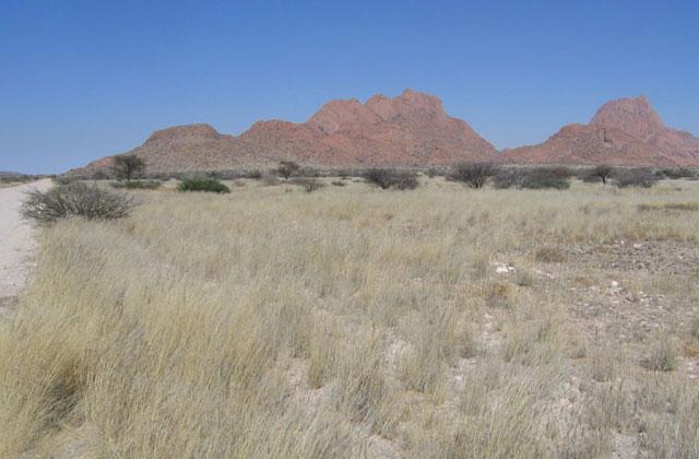 [Obrazek: Namibia079.jpg]