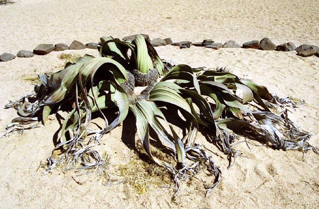 [Obrazek: Namibia088.jpg]