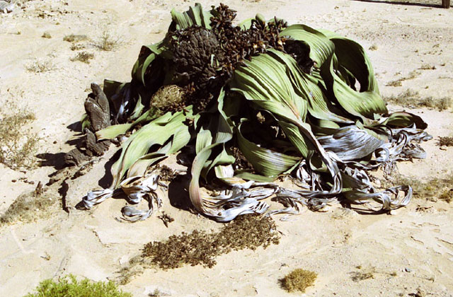 [Obrazek: Namibia089.jpg]