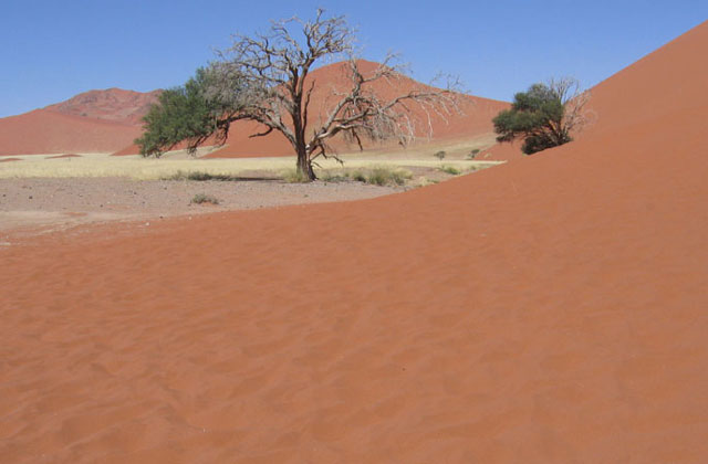 [Obrazek: Namibia093.jpg]
