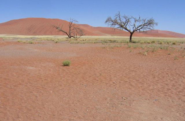 [Obrazek: Namibia094.jpg]