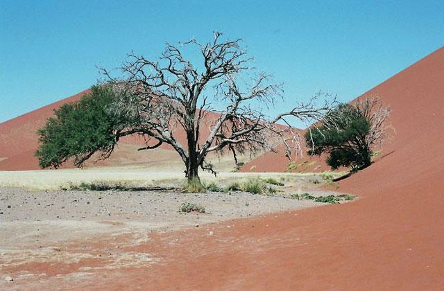 [Obrazek: Namibia096.jpg]