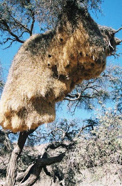 [Obrazek: Namibia109.jpg]