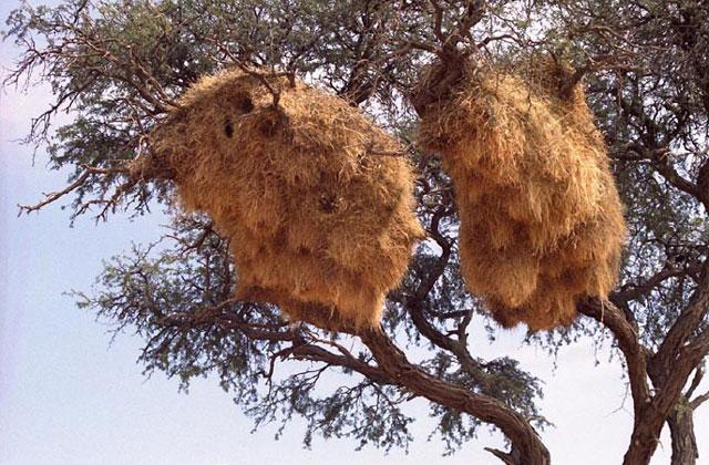 [Obrazek: Namibia110.jpg]
