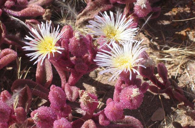 [Obrazek: Namibia111.jpg]