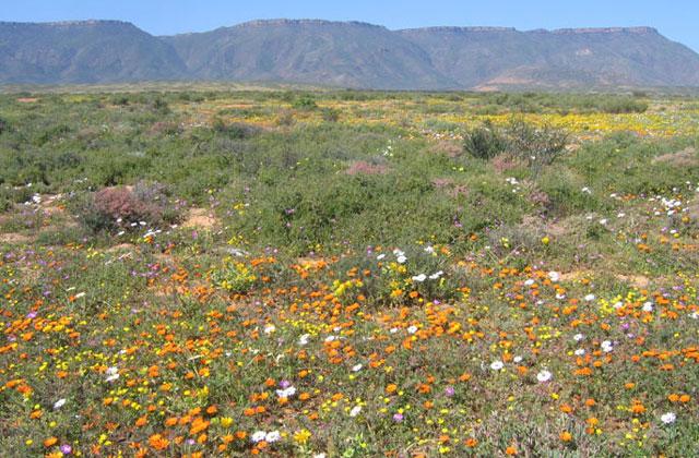 [Obrazek: Namibia115.jpg]