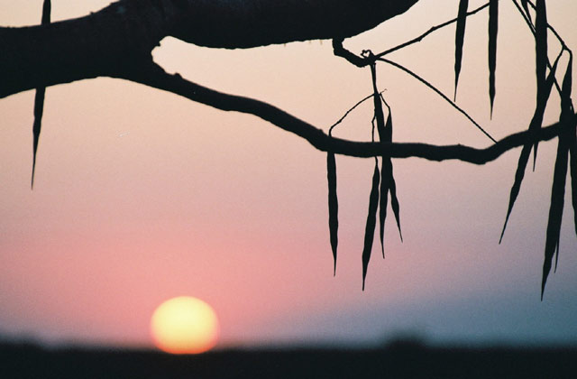 [Obrazek: NamibiaHallali.jpg]